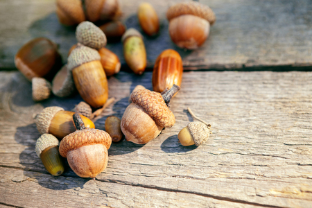 Acorns on an old wooden surface