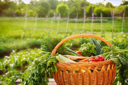 Fresh organic vegetable basket on the table