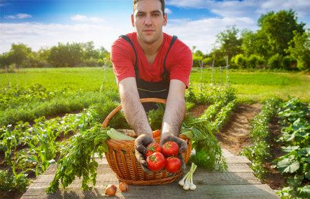 Tomato in farmer hands.Young farmer holding fresh tomato.