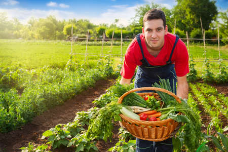 Wicker basket with vegetable in farmers hands.Farmer holding basket with vegetables.