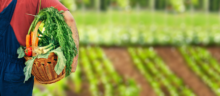 Vegetables bio healthy food, organic vegetables over agricultural green fields