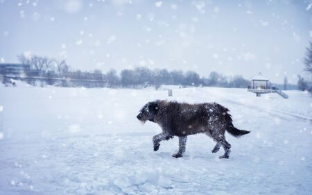 Dog on snowy, cold winter day. Standard-Bild