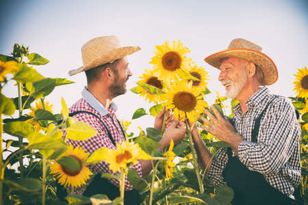 Two generation of farmers in sunflower field, together it is easier and better
