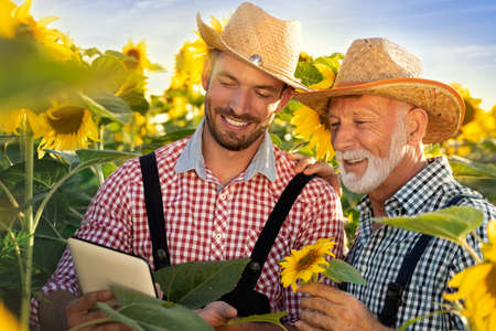 Farming industry of two farmers using a tablet PC in sunflowers in field