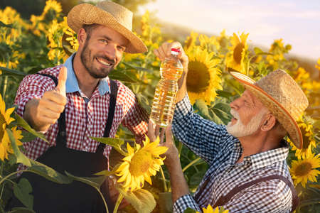 Happy farmers  showing thumbs up approves quality of organic sunflower oil Foto de archivo