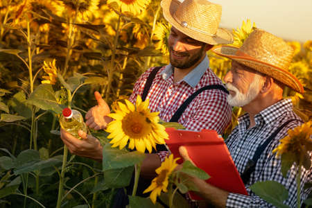 Two farmers discussing about of Benefits of sunflower production Foto de archivo