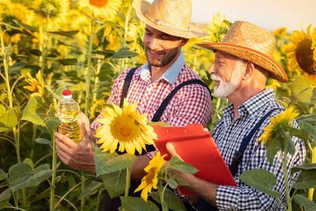 Senior farmer with adult son in sunflower field with bottle of sunflower oil