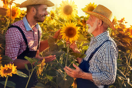 young man with father  control quality of sunflower  on a farm