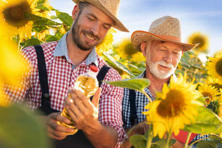 Happy team farmers in sunflowers field. They satisfied smiling and looking in bottle of oil Foto de archivo