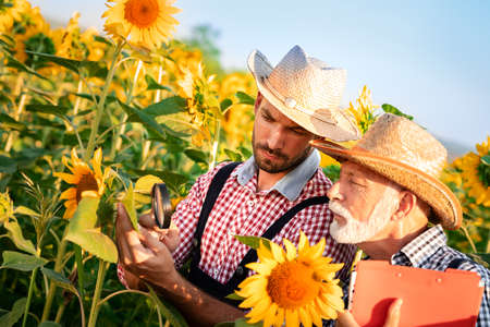 Young man showing sunflower to senior farmer at farm