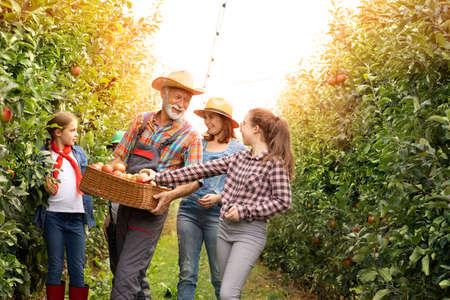 Family harvesting apples in garden Foto de archivo - 154726177