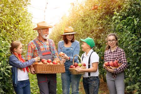 Portrait smiling farmers harvesting apples in orchard Foto de archivo