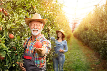 Bearded farmer holding apple in hand and showing his organic product. Foto de archivo - 154726209