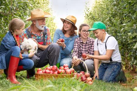 Joyful family relaxing next basket full of healthy and organic apples Foto de archivo - 154726210