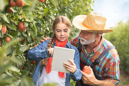 Apple in orchard. Little girl e-learning her grandfather on tablet