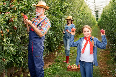 Little girl proudly holds up two apples that she just picked from an apple tree during the autumn apple harvest