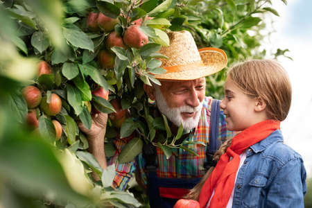 Grandfather picking apples with his granddaughter in orchard Foto de archivo - 154726218