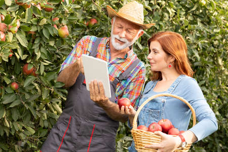 Smiling farmers using digital tablet in sunny apple orchard Foto de archivo