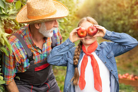 Girl with apples in the apple orchard. Beautiful girl having fun in organic apple orchard her grandfather. Harvest concept. Garden, teen eating fruits at fall harvest Foto de archivo