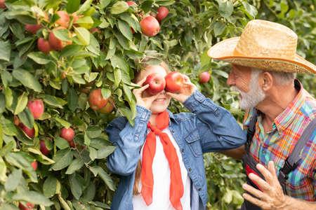 Senior bearded man having fun with his granddaughter in apple orchard Foto de archivo - 154726245