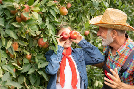 Funny girl playing with her grandfather in orchard, teen girl holding apples over her eyes. Harvest concept.