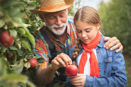 Young girl learn from grandpa how to measure the size of an apple