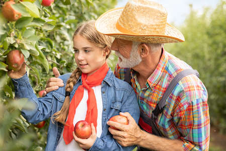 Grandfather and granddaughter picking apples from the tree Foto de archivo - 154726255