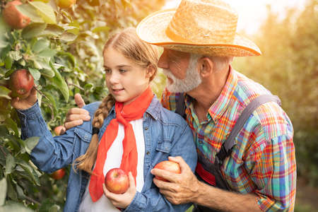 Portrait of cute teen girl pick up the apple on garden with her grandfather Foto de archivo