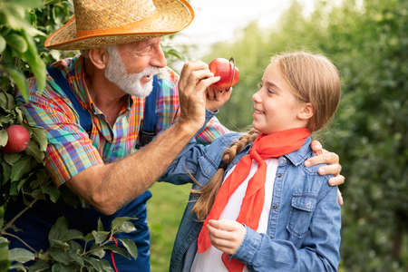Little girl having fun in apple orchard with her grandfather