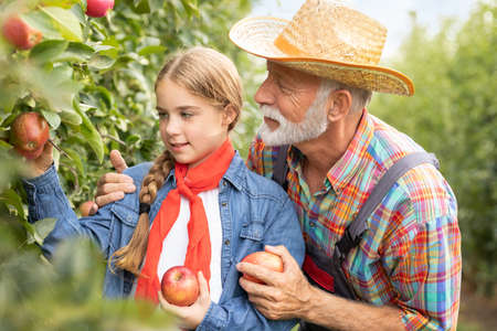 Grandfather assisting granddaughter for picking apple in orchard Foto de archivo - 154726261