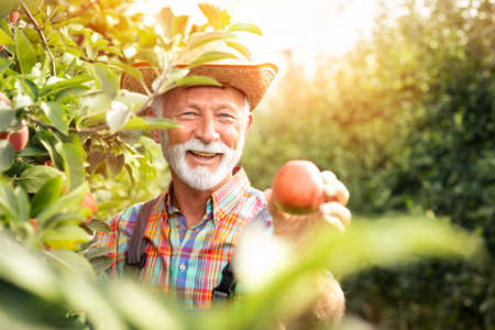 Senior farmer satisfied smiling and holding his organic product Foto de archivo - 154726282