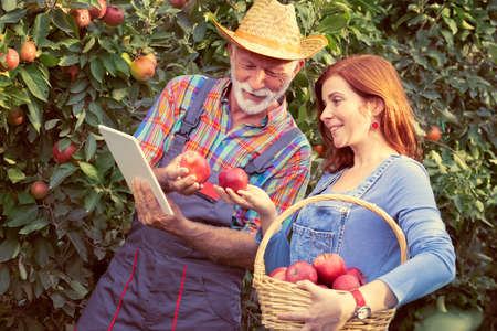 Adult daughter working in apple orchard with senior father farmers with tablet