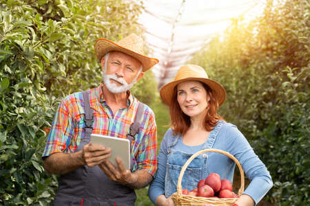 Portrait of male and female fruit grower in plantation of fruit with digital tablet