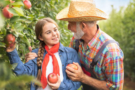 Smiling young girl with grandfather in apple orchard, harvesting and fun