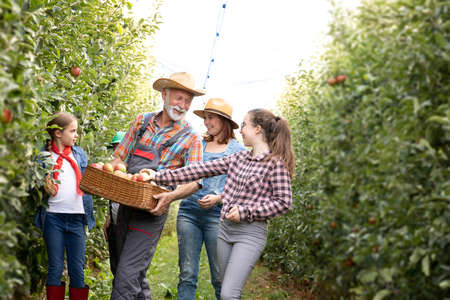 Multi-generation family harvesting apples in orchard. Apple picking is fun for the family Foto de archivo