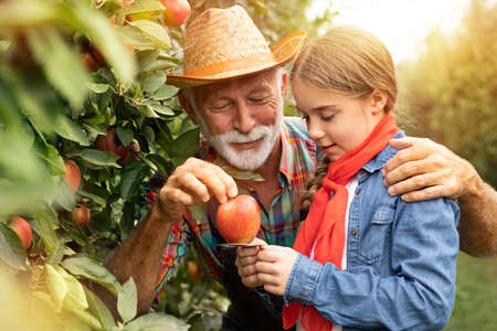 Cute ten year old picking apples with her grandfather with size ring