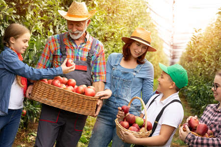 Smiling family harvesting organic apple together in own orchard