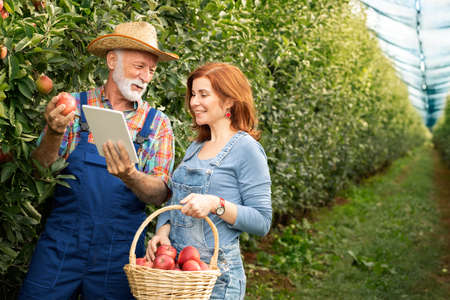 Happy old farmers holding an apple and using modern technology at the orchard