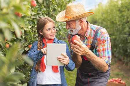 Adorable girl with senior grandfather with digital tablet in apple in orchard