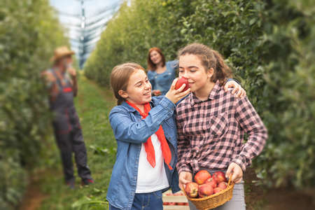 Two little girls enjoy in taste of organic apples in grandparent's orchard