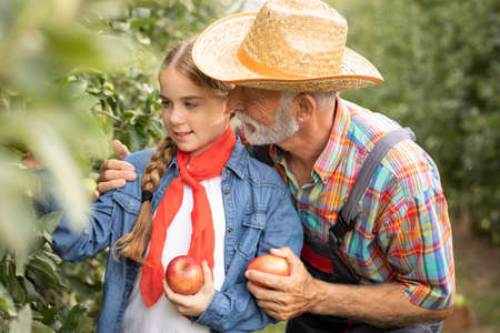Portrait of grandfather in a hat and plaid shirt with his cute granddaughter picking apples the harvest in the apple trees garden. Outdoor Foto de archivo