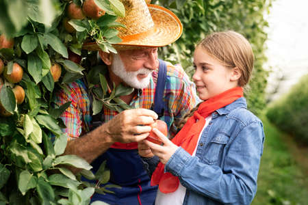 Smiling grandfather checking size of apple with his granddaughter in orchard Foto de archivo