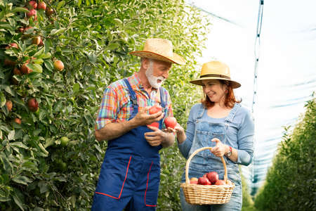 Couple with apple basket smiling. Cheerful people outdoor. Life, love and health. Foto de archivo