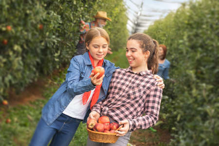 Two smiling young sisters picking apples and having fun Foto de archivo