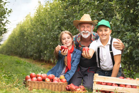 Happy senior man working with his grandchildren at the plantation of fruit Foto de archivo