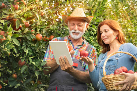 Fruit growers with digital tablet checking quality in modern organic orchard