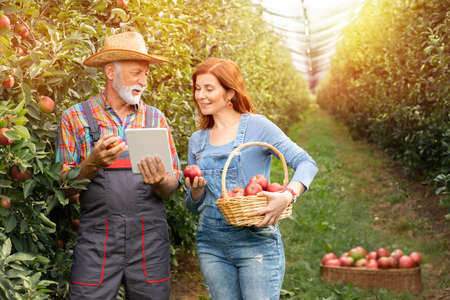 Couple with digital tablet standing at the apple orchard and smiling Foto de archivo