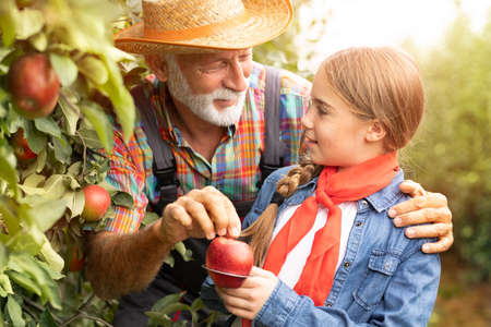 Smiling teen girl with measure ring working with grandpa in apple orchard Foto de archivo