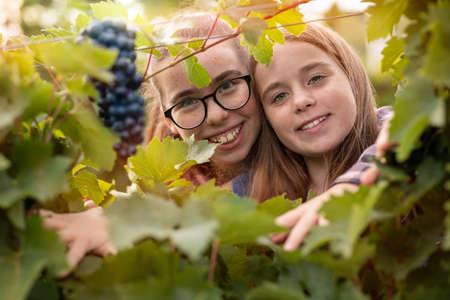 Beautiful little sisters in fall vineyard, family fun