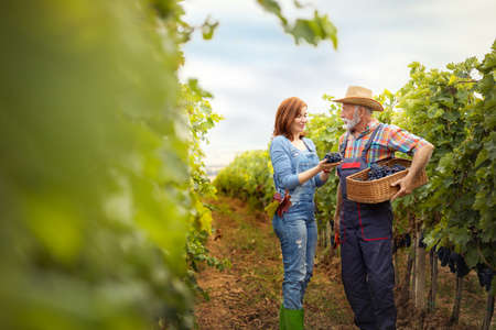Senior winegrower with young woman standing in autumn vineyard with basket freshly picked grapes